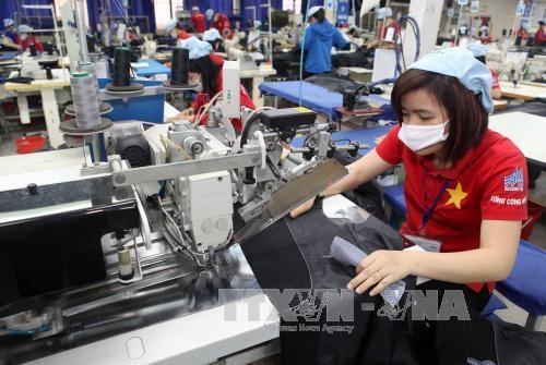 承天顺化省纺织服装企业努力转变生产模式 hinh anh 1