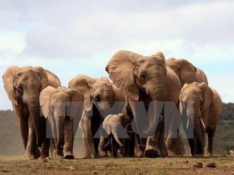 """""""捏塑大象-拯救大象""""——提高野生动物保护意识的实习班 hinh anh 1"""