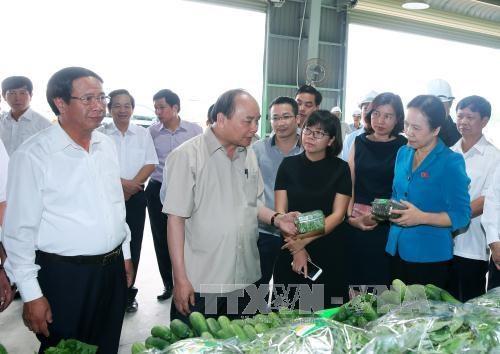 越南政府总理阮春福参观海防VinEco高科技农业投资项目 hinh anh 1