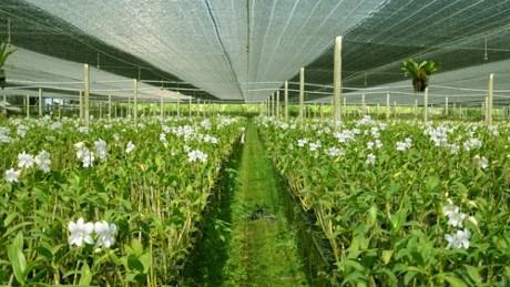 富安省投资5200亿越盾兴建高科技农业区基础设施 hinh anh 1