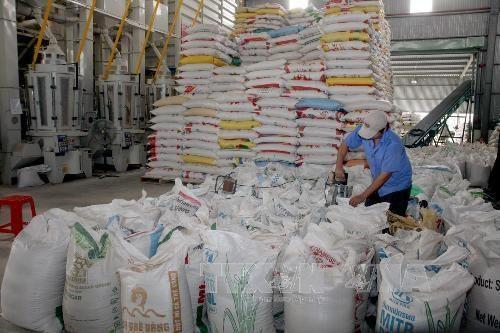 菲律宾将再从越南进口逾29.3万吨大米 hinh anh 1