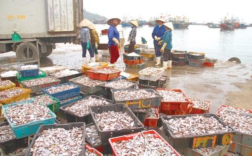 清化省海洋经济发展与新农村建设并行 hinh anh 1
