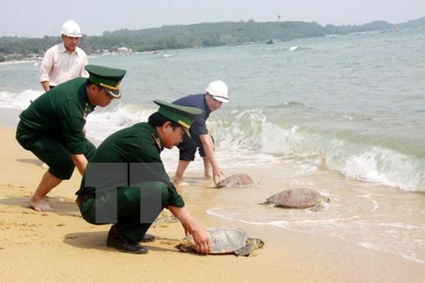 西宁省扣留从柬埔寨非法走私入境的66只乌龟 hinh anh 1