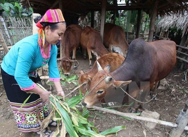 越南可持续减贫实现千年发展目标 hinh anh 1