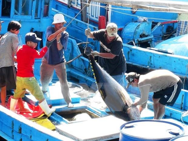 越南金枪鱼出口量迅速增长 hinh anh 1