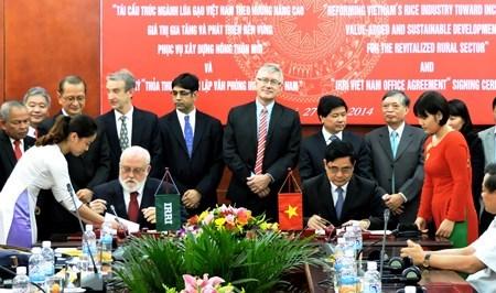 越南与国际水稻研究所合推动推水稻产业发展 hinh anh 1