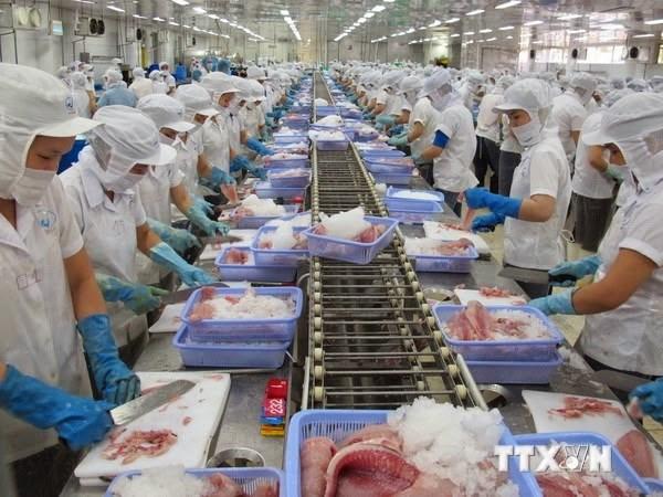 越南和欧亚经济联盟间的自由贸易协定生效 水产品出口商成大赢家 hinh anh 1