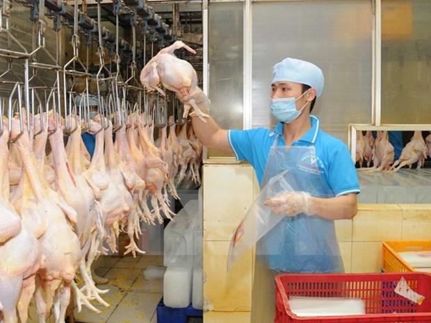 越南拟对日本出口鸡肉加工产品 hinh anh 1