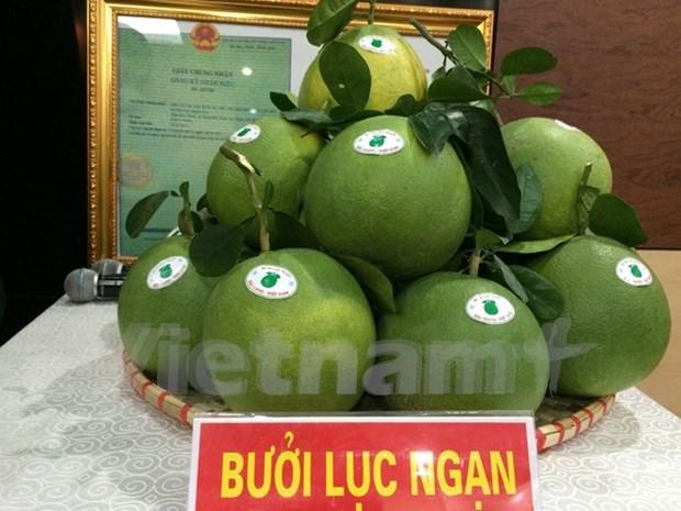 越南北部首次举办水果节 hinh anh 1