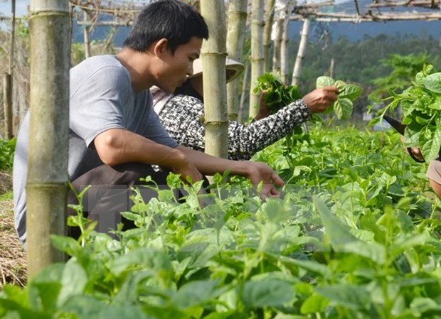胡志明市促进对高科技农业园区的投资 hinh anh 1
