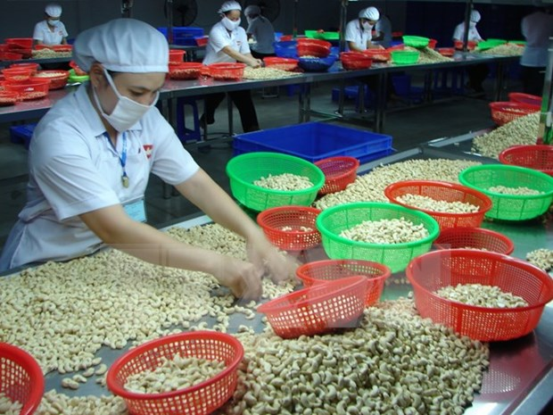 今年前10月越南腰果出口量和金额均上涨 hinh anh 1