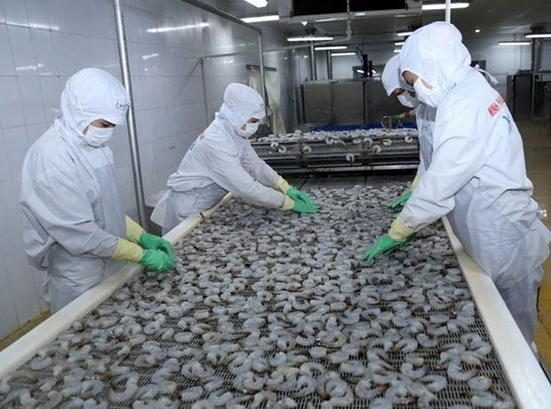 越南进一步加大水产品对巴西出口力度 hinh anh 1