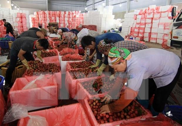 2015年越南边贸额270亿美元 hinh anh 1