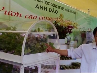 胡志明市协助企业投资高科技种植蔬菜 hinh anh 1