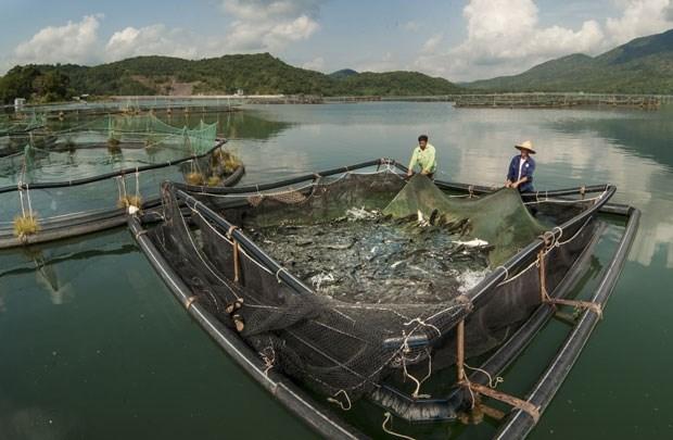 泰国太平洋海产加工有限公司拟定在越南成立联营企业 hinh anh 1