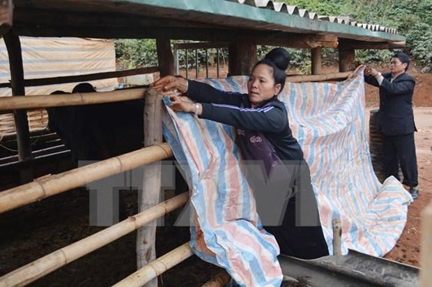 越南北部迎来40年来罕见低温寒冷天气 hinh anh 1