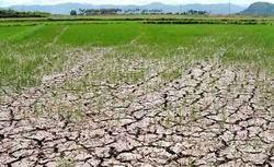 越南政府协助全国34个省市克服旱灾及海水入侵带来的影响 hinh anh 1