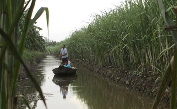 九龙江三角洲可持续发展:气候变化所带来的挑战 hinh anh 1