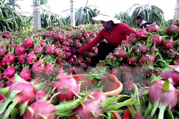 澳大利亚市场为越南农产品敞开大门 hinh anh 1