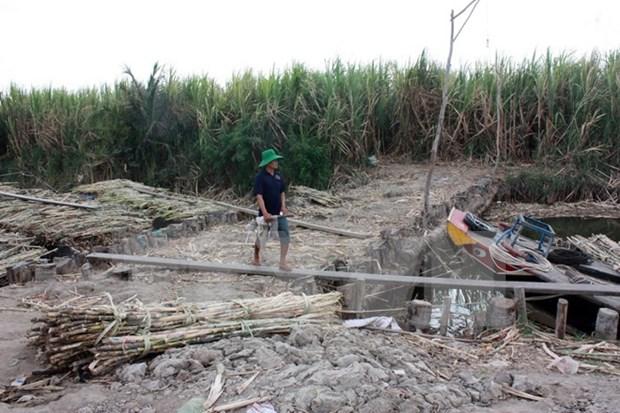 世行协助越南九龙江平原提升应对气候变化能力 hinh anh 1
