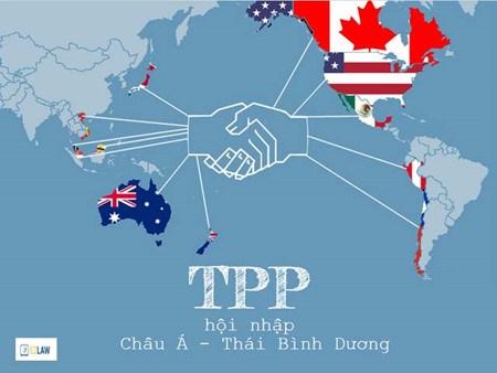 越南加入TPP后中小型企业力争上游提高竞争力 hinh anh 1