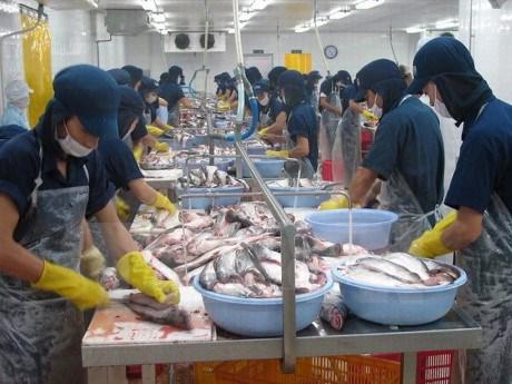 越南海产品出口质量未受到中部地区鱼类大批死亡现象的影响 hinh anh 1