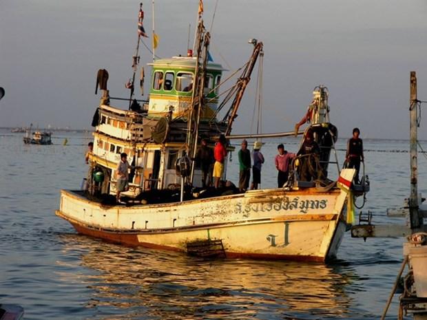 欧盟敦促泰国解决非法捕鱼问题 hinh anh 1