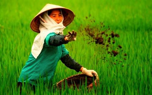 中国化肥占越南化肥进口量近45% hinh anh 1