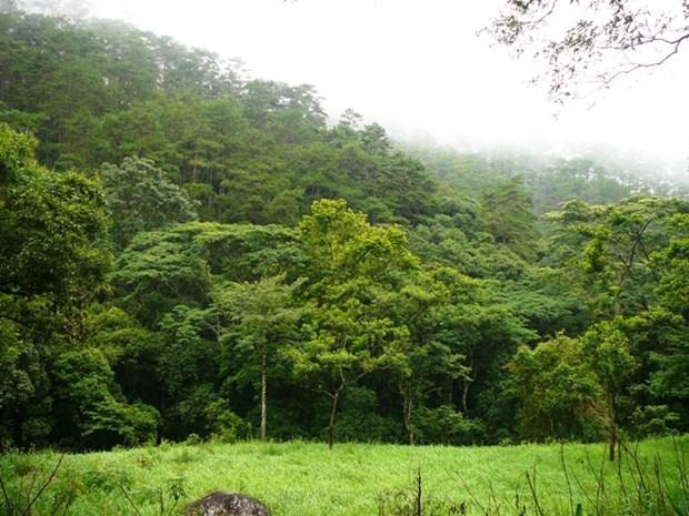 西原地区各省力争到2020年新造林面积达7.1万公顷 hinh anh 1