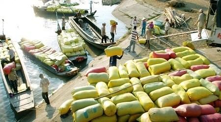 2016年上半年越南大米出口量达265多万吨 hinh anh 1
