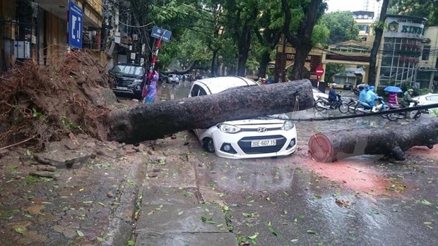 今年第一场台风登陆越南北部各地采取措施开展台风抗灾救灾工作 hinh anh 1