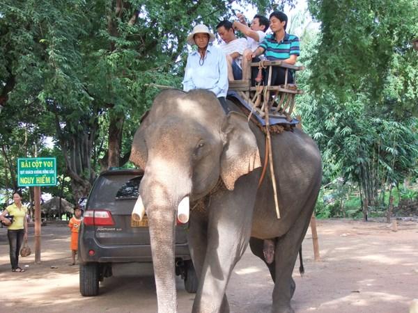 保护大象宣传周在广南省举行 hinh anh 1
