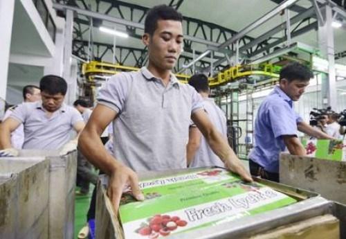 越南蔬果出口机会众多 hinh anh 1