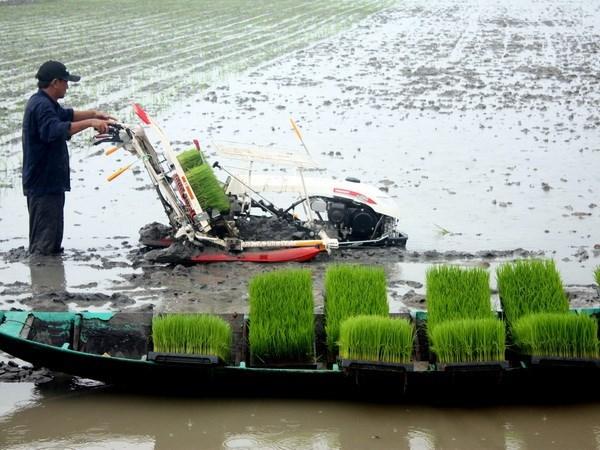 芹苴市希望与新西兰加强绿色农业合作 hinh anh 1