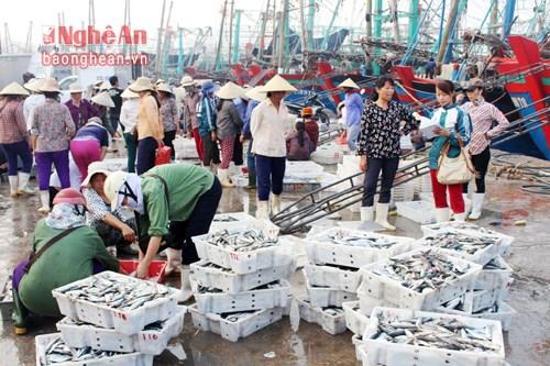 乂安省加强海洋资源保护工作 hinh anh 1