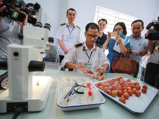 越南驻澳大利亚大使:越南应改变农业生产习惯 满足高端市场的要求 hinh anh 1