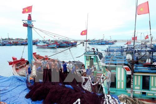 国家主权:提高人民对保护和可持续发展海洋岛屿的意识 hinh anh 1