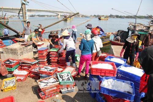 2016年前8月越南水产捕捞产量达200多万吨 hinh anh 1