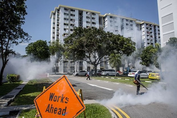 新加坡寨卡疫情呈现减缓趋势 hinh anh 1