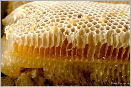 养蜂致富和适应气候变化 hinh anh 1