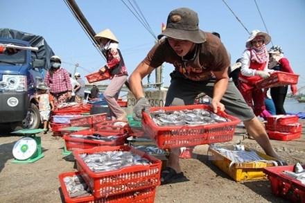 越南渔业工会建议设定中部地区禁止底层捕捞的禁渔区 hinh anh 1