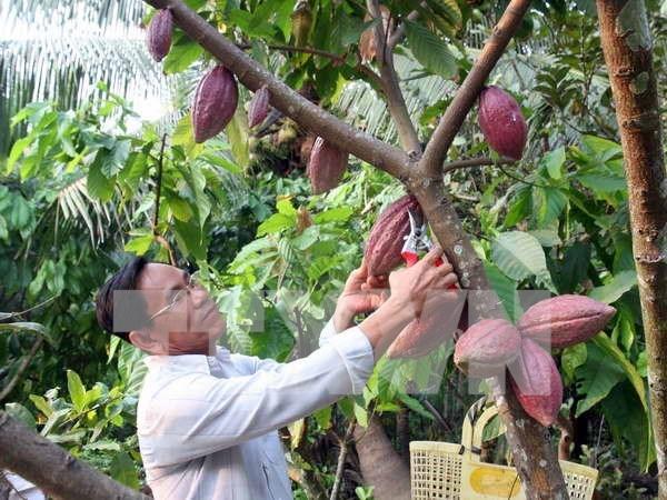 越南可可跻身于好味道的排行榜 hinh anh 1