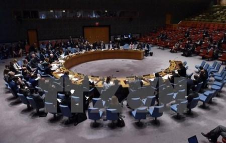越南希望继续在联合国发挥更大作用并拥有更大发言权 hinh anh 1
