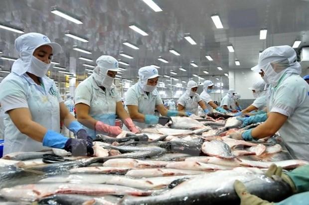2016年越南查鱼出口总额有望增长5% hinh anh 1