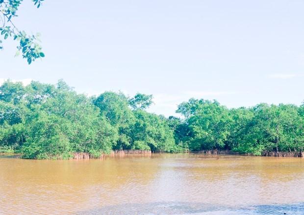 越南海洋海岛:保护广治省海边堤坝系统 hinh anh 1