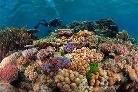 有效维护海洋环境清洁 hinh anh 1