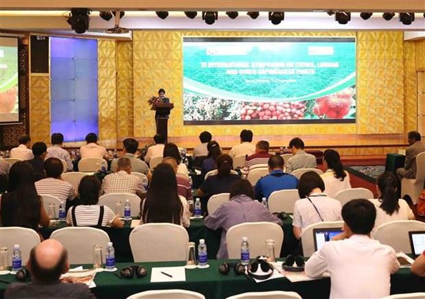 越南学习借鉴龙眼与荔枝生产国际经验 hinh anh 1