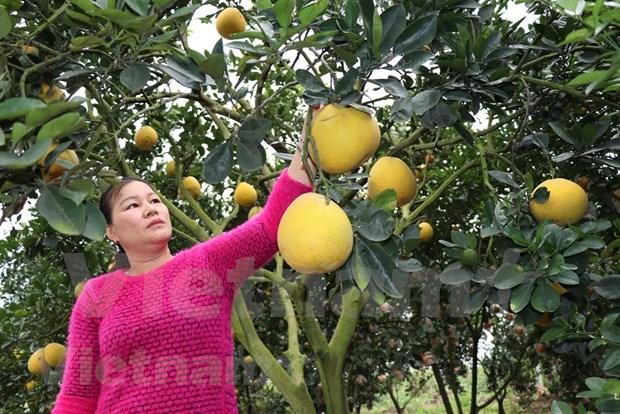 越南农业解决瓶颈 振翅飞翔 hinh anh 3