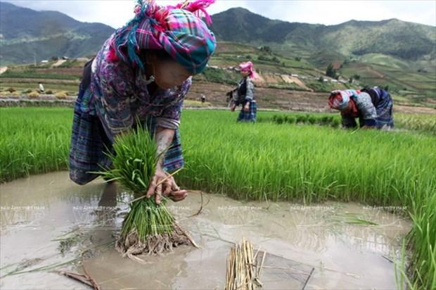 越南:木岗寨梯田美景 hinh anh 10