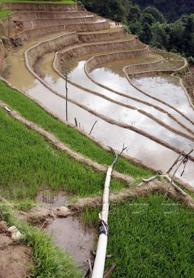 越南:木岗寨梯田美景 hinh anh 11